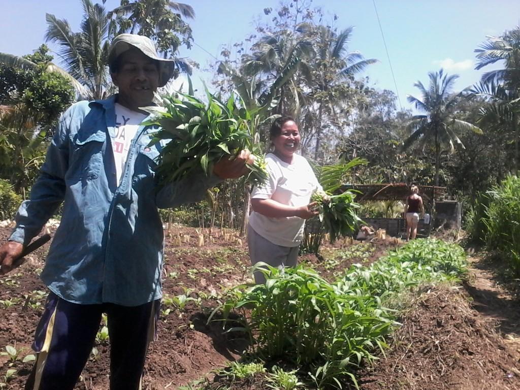 Kangkung oogsten